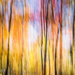 The Fleeting Colors Of Fall by lesip