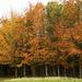 Fosse Meadows by shepherdman