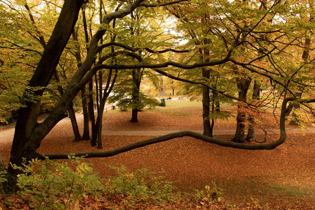 Beech trees by angelikavr