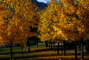 24th Oct 2019 - yellow trees and a bench