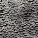 A wall of mushrooms. by pyrrhula