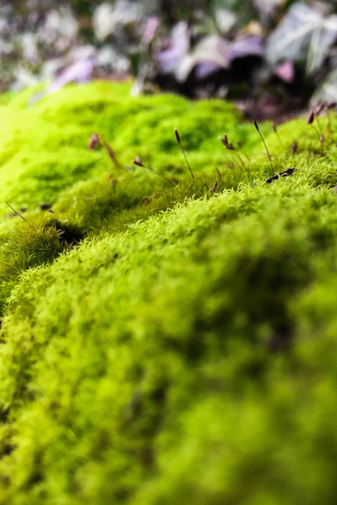 Moss by imnorman