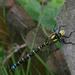 Dragonfly by parisouailleurs