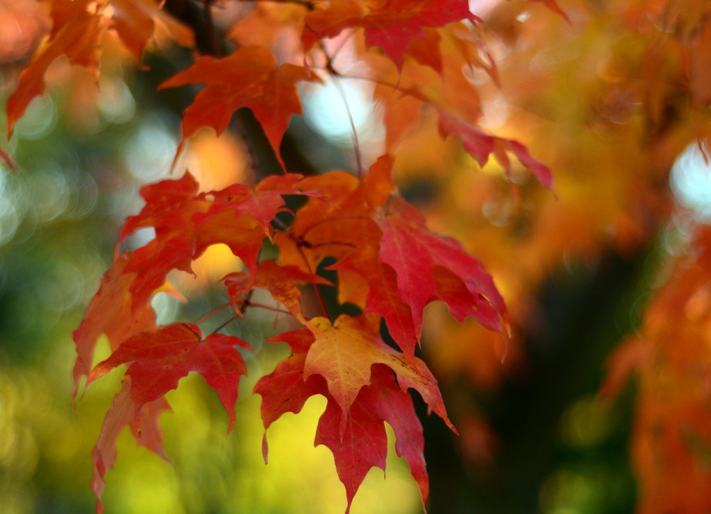 Not enough adjectives for autumn colours by jayberg