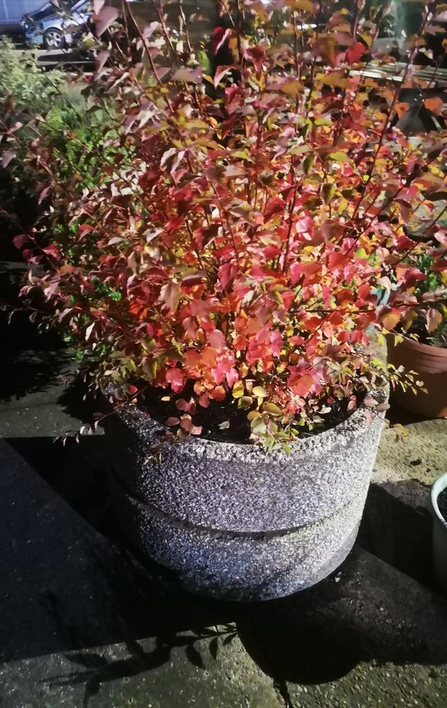 Autumn colours by plainjaneandnononsense