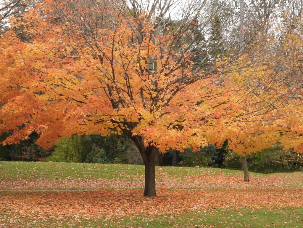 Fall happens by amyk