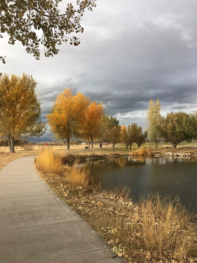 Loving fall  by janewinfrey