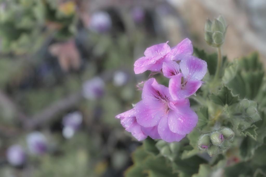 Bloom by kgolab
