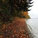 Leaf Covered Trail by seattlite