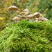 spotted this clump of fairy toadstools on top of a gatepost by snowy