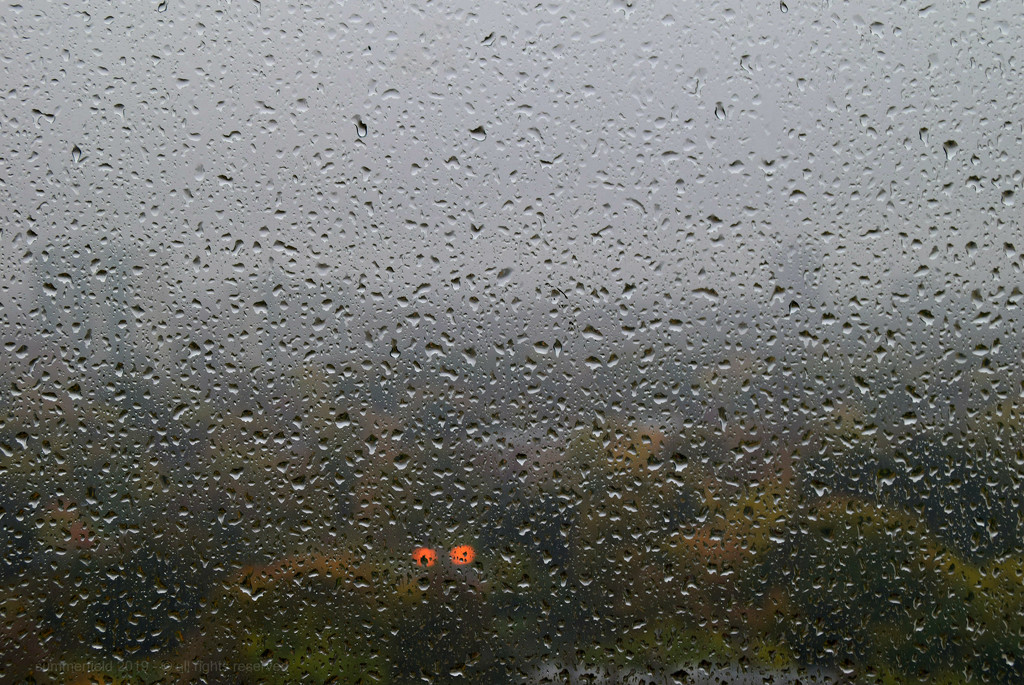 have you ever seen the rain? by summerfield
