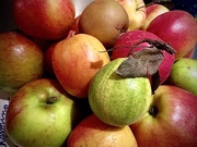 26th Oct 2019 - An assortment of English apples