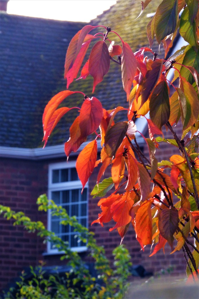 Autumn colours  by beryl