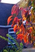28th Oct 2019 - Autumn colours