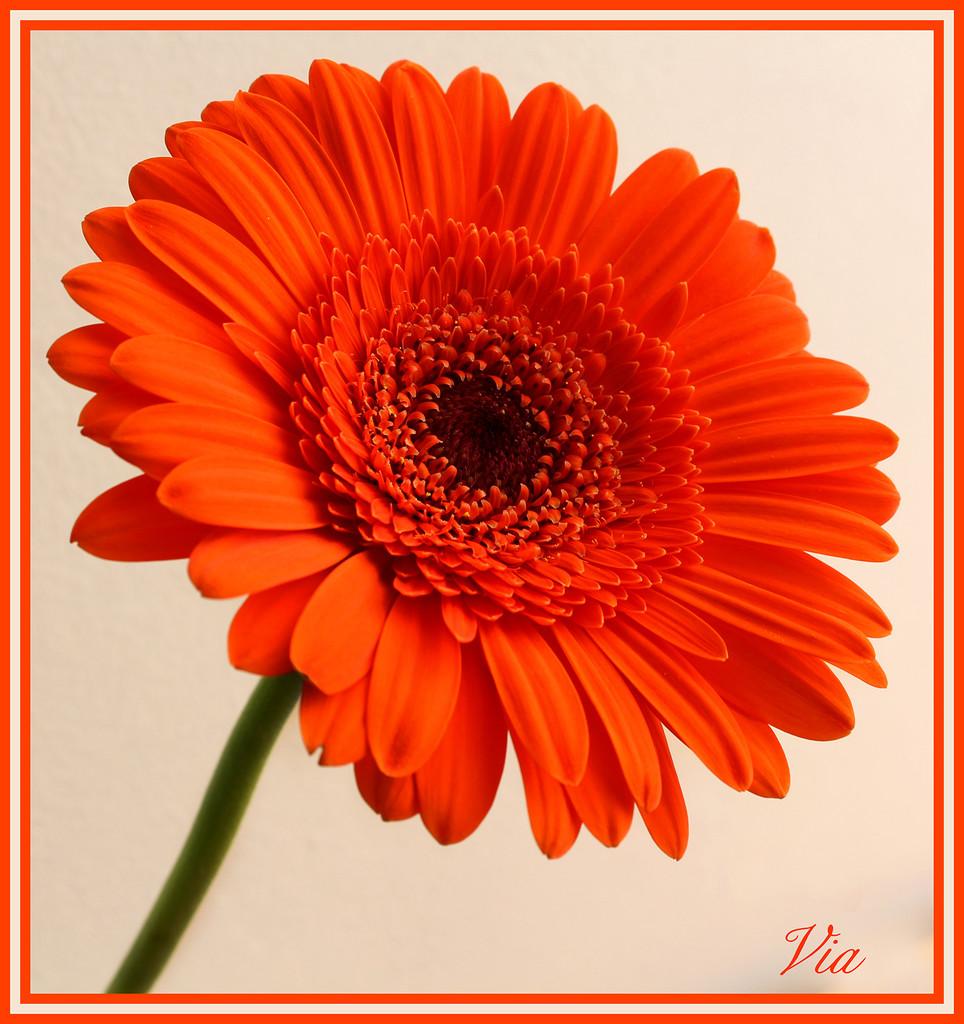 Orange and bright by sdutoit