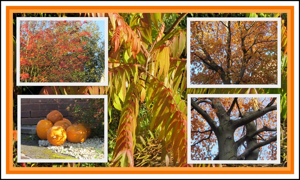 Golden shades of Autumn. by grace55