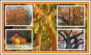 29th Oct 2019 - Golden shades of Autumn.