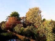 28th Oct 2019 - Autumn sun from my bedroom window