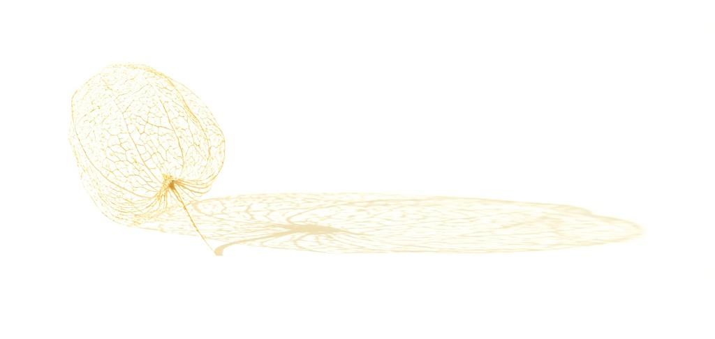 Gilded filigree by dulciknit