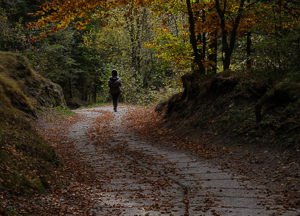 walking in the silence of autumnal woods by caterina