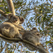 helping hand by koalagardens