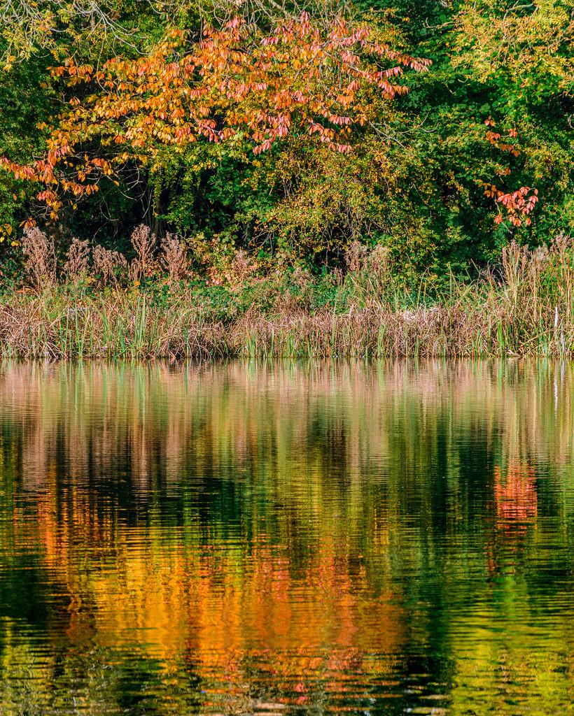 Bingham's Pond, Glasgow by iqscotland