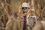 29th Oct 2019 - Lost In A Sea Of Corn