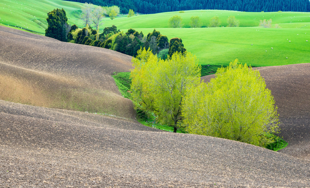 Southland Countryside - 2 by yaorenliu