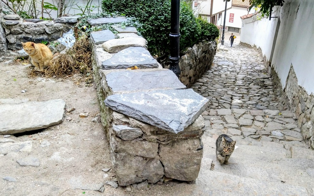 Cats in Plovdiv old town by boxplayer