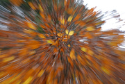 30th Oct 2019 - Autumn, an explosion of colours