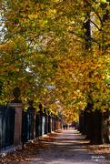 30th Oct 2019 -  Autumn in Aranjuez ( Madrid)