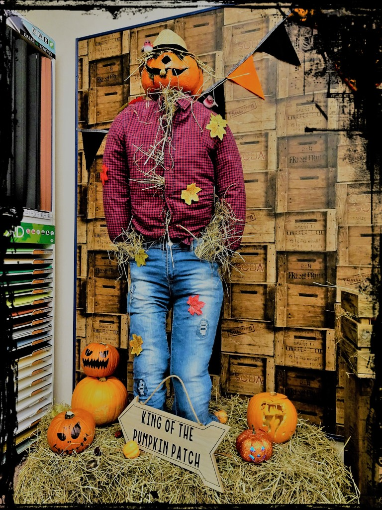 King of the Pumpkin Patch  by beryl