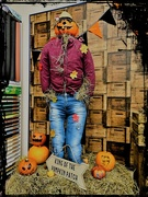 31st Oct 2019 - King of the Pumpkin Patch