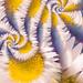 Daisy whirl....... by ziggy77
