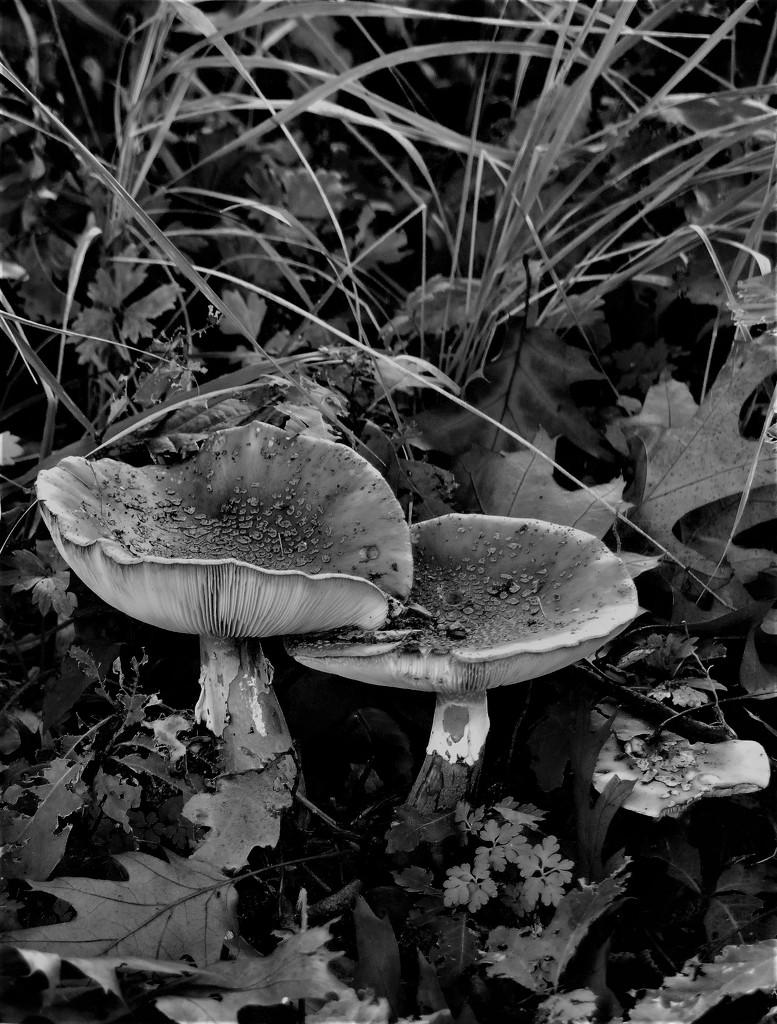 In black & white II by madeinnl