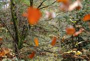 31st Oct 2019 - falling leaves