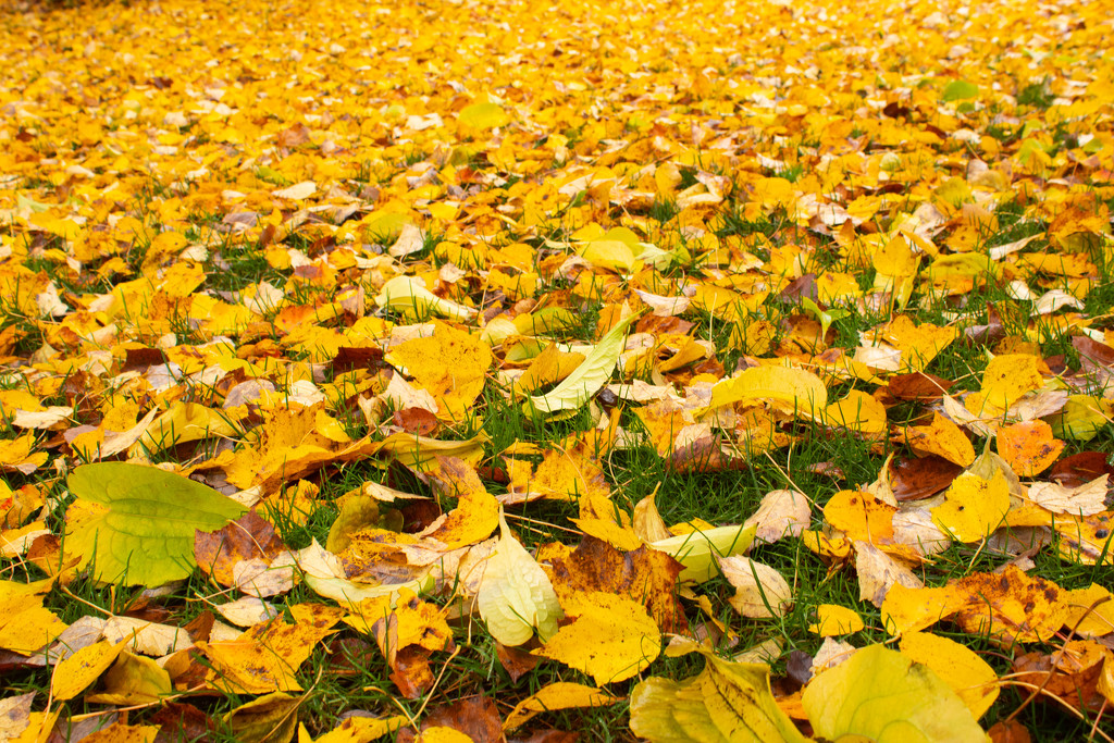 Yellow Carpet by tdaug80