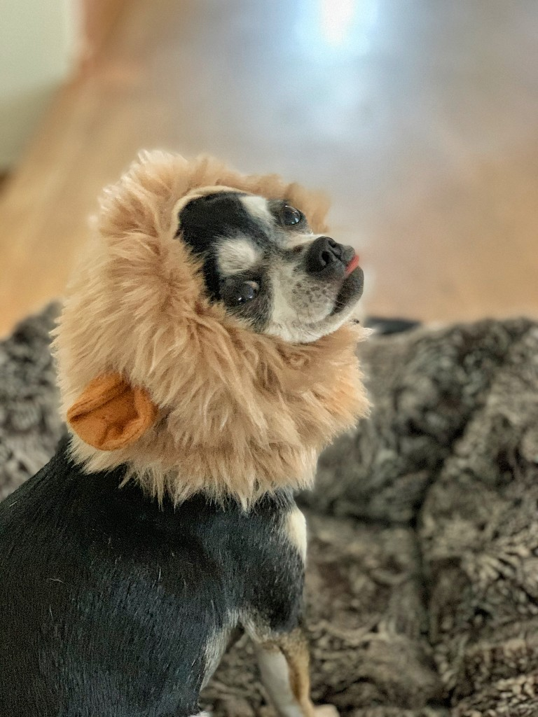 Lion king.  by cocobella