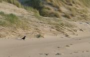 1st Nov 2019 - Bird on the beach