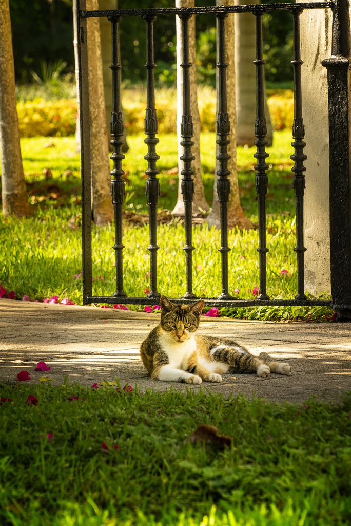 Church Cat by Weezilou