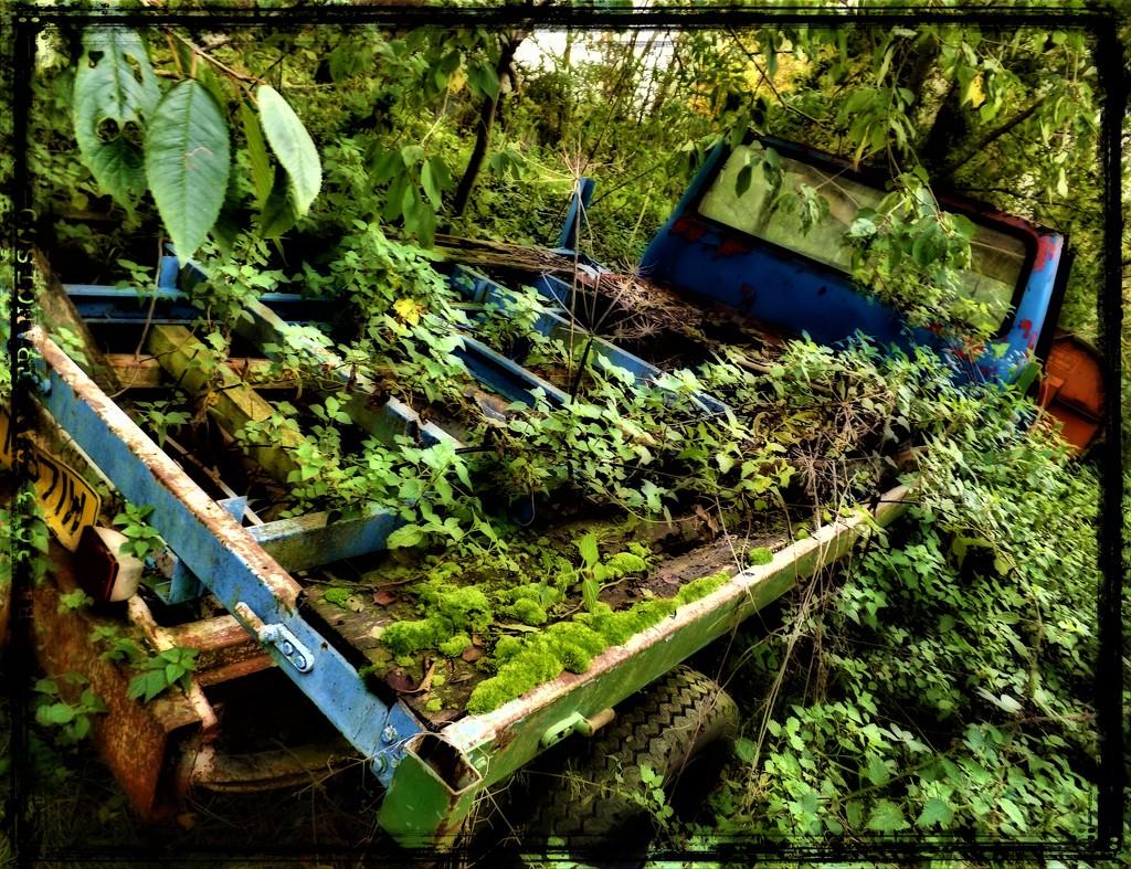 Jungleland by ajisaac
