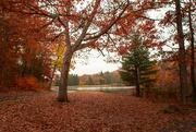 1st Nov 2019 - More fall colors