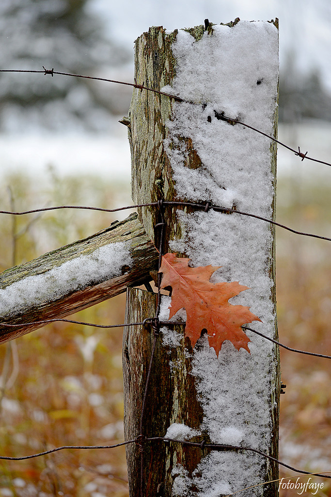 Winter's IN ... Fall is OUT! by fayefaye