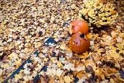 1st Nov 2019 - Fall