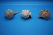 2nd Nov 2019 - seashells and time