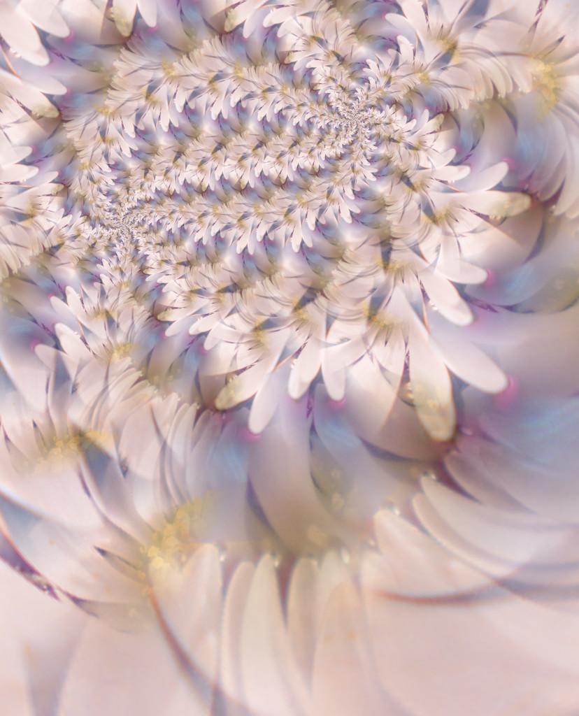 White petals.........  by ziggy77