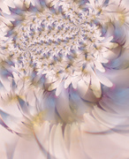 2nd Nov 2019 - White petals.........