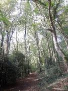 2nd Nov 2019 - Light in the woods (1)