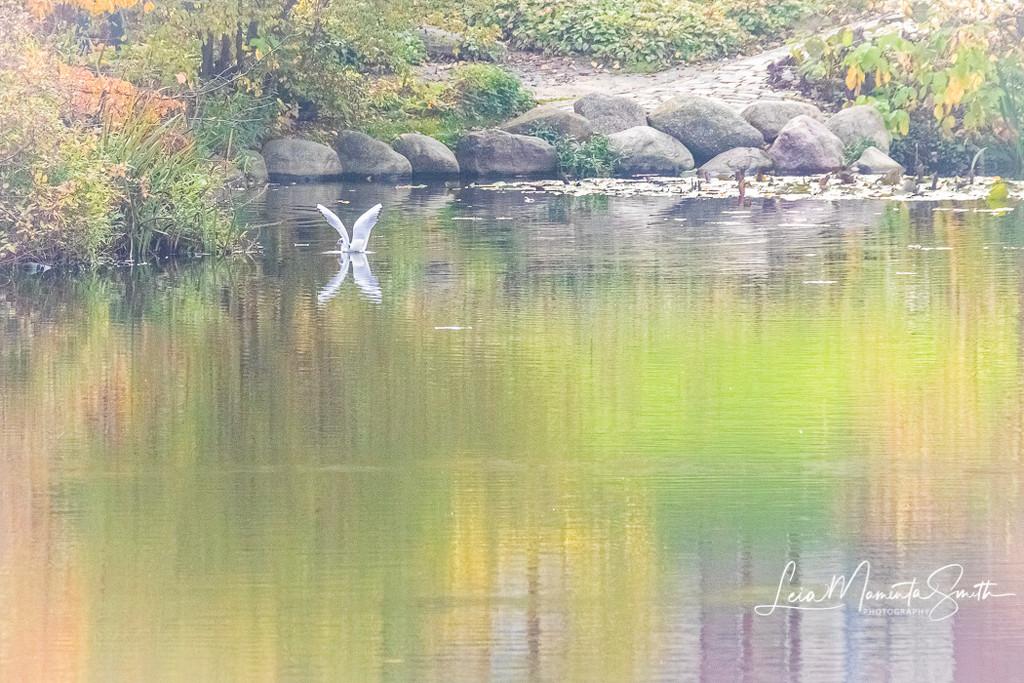 Bird on pond in Copenhagen by princessleia