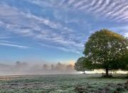 1st Nov 2019 - Bradgate in the mist